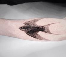 Kuş Dövme Modelleri ve Çeşitleri